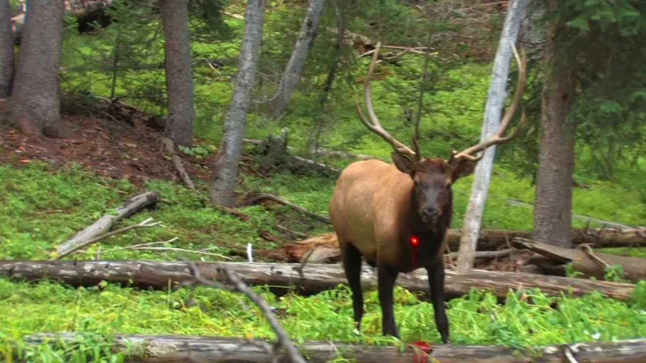 13 year old shoots elk in the chest youtube