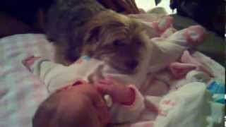 Dog protecting baby
