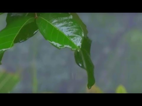 Heavy Monsoon Rain  Kerala video