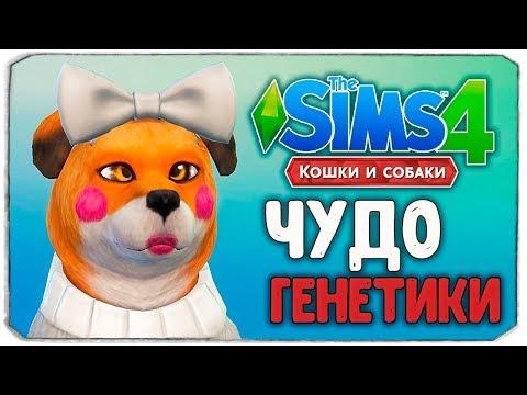 ЧУДО ГЕНЕТИКИ, ЛИСА - The Sims 4 Кошки и Собаки