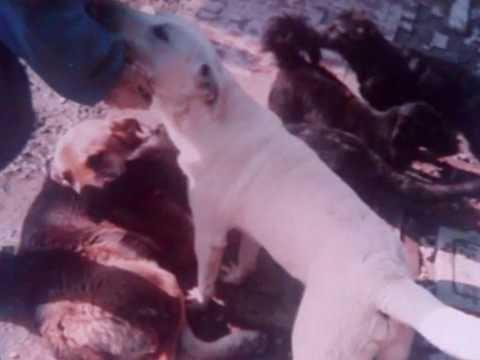 l'amore per gli animali.wmv