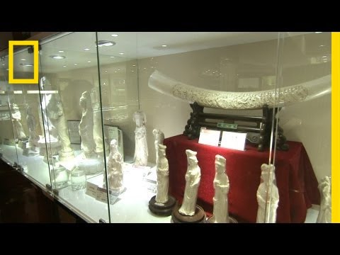 Battle for the Elephants Episode 3: The China Ivory Market