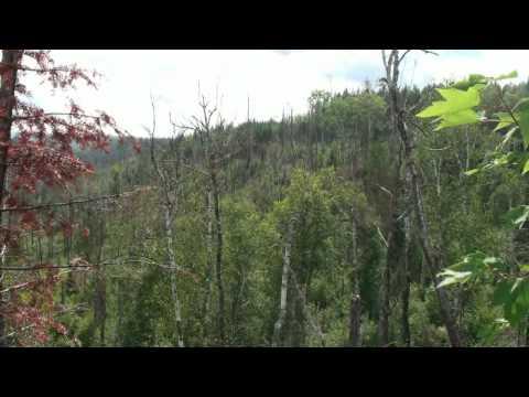 Trestle remains, Port Arthur, Duluth and Western Railway near Round Lake, MN