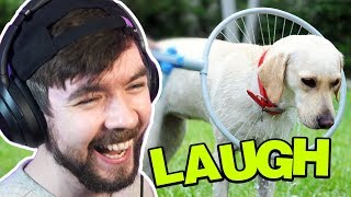 What Are They DOING To That Poor Dog? - Jacksepticeyes Funniest Home Videos