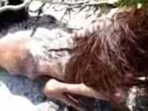 Mermaids Real Videos Real Mermaid Found