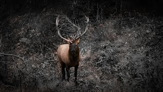 Bowhunting Elk - Dream Hunt 2019 - Part 1