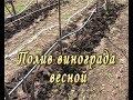 Весенний полив винограда mp3