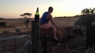 Riding my pet Jersey Friesian Cow