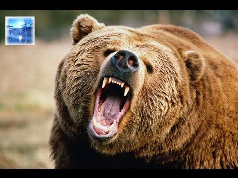 Russian Bear Awakes! | Stan Johnson | The Prophecy Club Radio (part 1 of 4)
