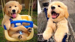 Baby Dogs - Cute and Funny Dog Videos Compilation #20 | Aww Animals