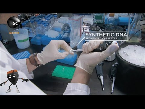 Creating Synthetic Life
