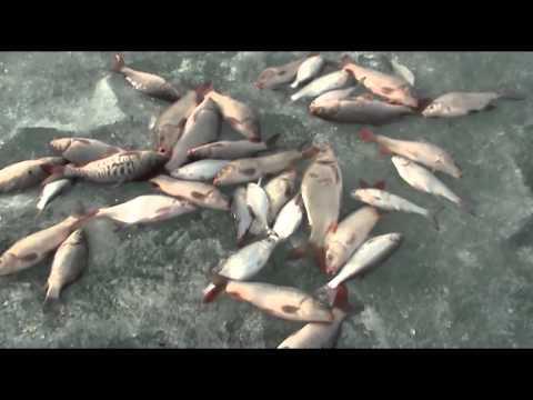 рыбалка в вко видео