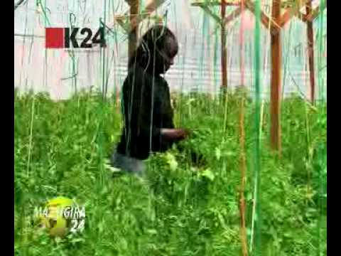 Mazingira 24  - Farmers kit for green houses - Part 2 of 2