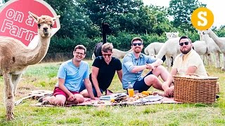 Perfect Alpaca Picnic: Out of the City