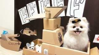 shimizuさんの動画サムネイル画像  | ポメラニアンのみおちゃん