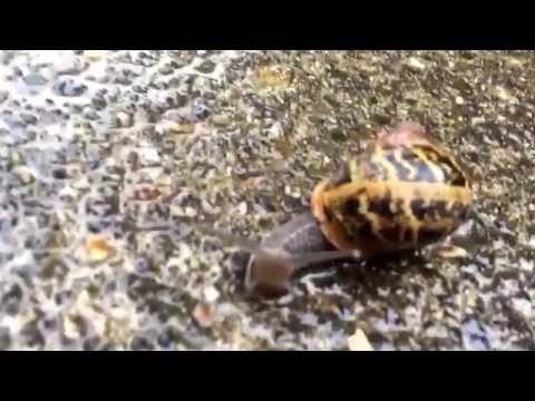 Snail Prank