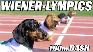 The 100m Dachshund Dash! - Wiener Dog Race!