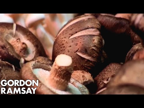 An Expert's Guide to Mushrooms - Gordon Ramsay