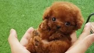 Compilation of cute and funny baby animals | animas | animals TV