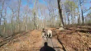 The fun section at Hidden Pond Park in Smithtown, NY Fat-Bikejoring with Tucker and Summer