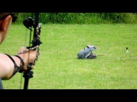 Archery Rabbit Field target