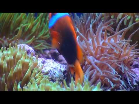 The Living Planet Aquarium Utah 39 S Aquarium In The Desert