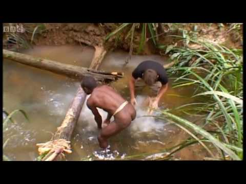 Tribe: visiting a tribe famed for cannibalism - Explore - BBC Music Videos