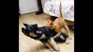cute is not enough-funny cats and dogs