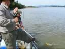Mai 08 - I Abreu e Simão - Pescaria de Pacu, Curimatã-Pioa e Dourado no Rio São Francisco