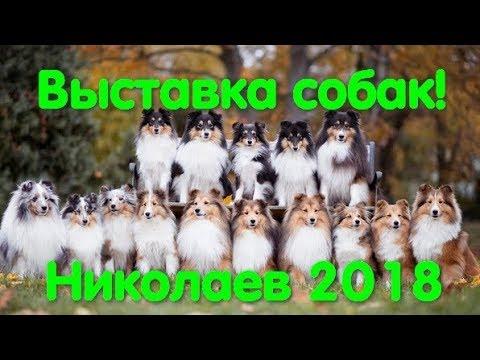 Выставка собак г. Николаев. 2018 год. КСУ. FCI-CAC. Арсания-Николаев. Dog show. ТОП-5 пород собак.