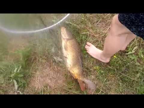 как запаривать горох для рыбалки на карпа