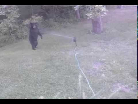 ScareCrow Vs Bear II