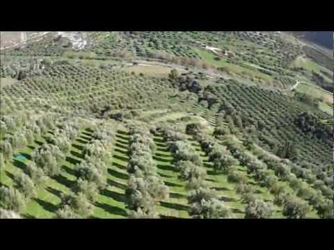 Μάζεμα ελιάς στην Κρήτη * Collecting olives in Crete