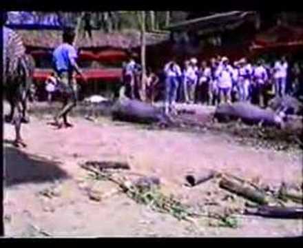 Cerimonia funebre/ tribù Toraja/Indonesia