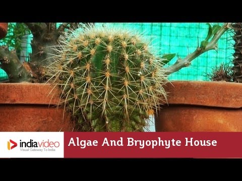 Algae and Bryophyte House, Nilambur