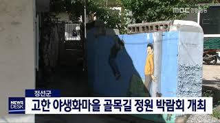 정선군 고한 골목길 정원박람회 7월부터 개최