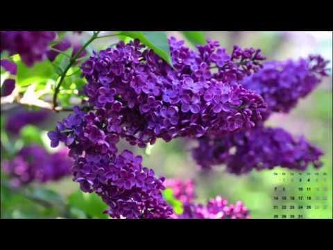 🔥Как отдыхаем на майские праздники, производственный календарь на 2018 год