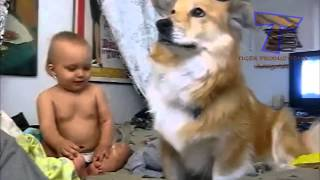 Dogs and babies playing with bubbles   Funny and cute compilation