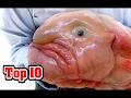 Top 10 UGLIEST ANIMALS MP3