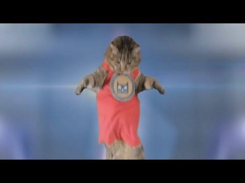 Cat vs Vet   UFO Robot   Grendzinger   Goldrake