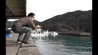 港で小物釣りをするはずが・・・
