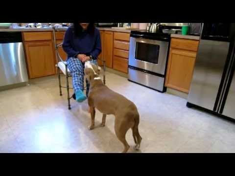 Pit Bull helps remove clothing