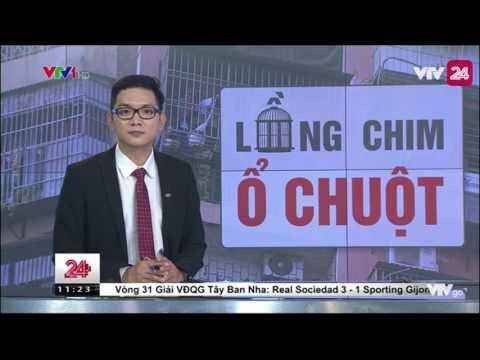 Tiêu Điểm: Chuồng Chim - Ổ Chuột - Tin Tức VTV24