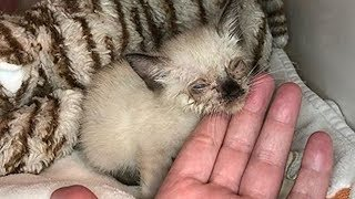 Amazing Transformation of  Little Stray Cat Was Malnourished With Nasty Eye Infection