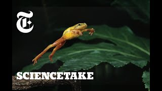 How Frogs Got Their Vertical Leap | ScienceTake