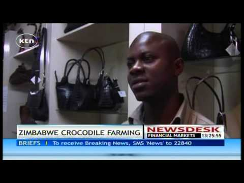 Zimbabwe's crocodile farming help to boost economy of their country