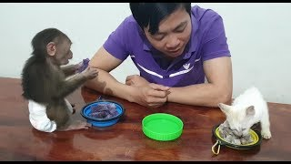 Baby Monkey | Daddy Prepares Dinner For Doo And Cat Miu