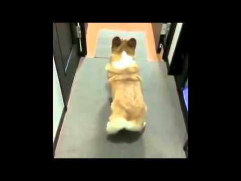 You Gotta Love Dogs   Dog Dances To Bubble Butt Vine By  Majorlazer360p Dash H 264 Aac video