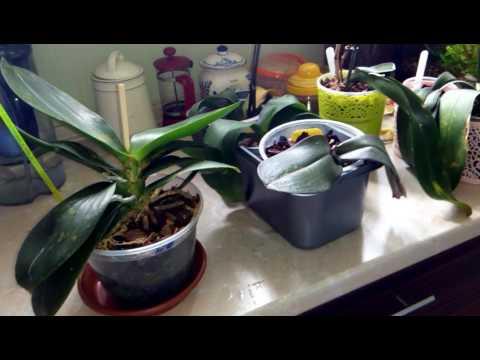 Во что сажают орхидеи 71