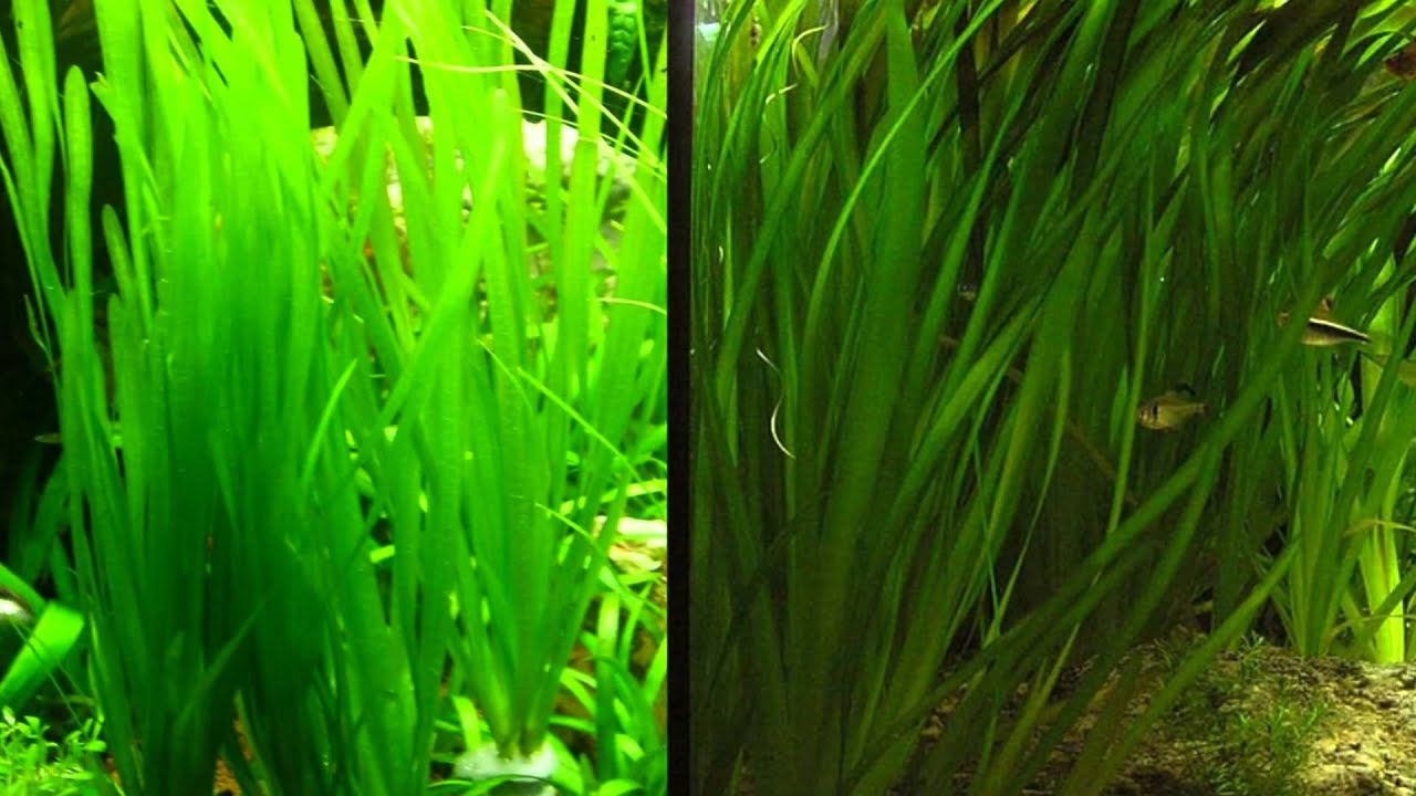 for Plante pour aquarium